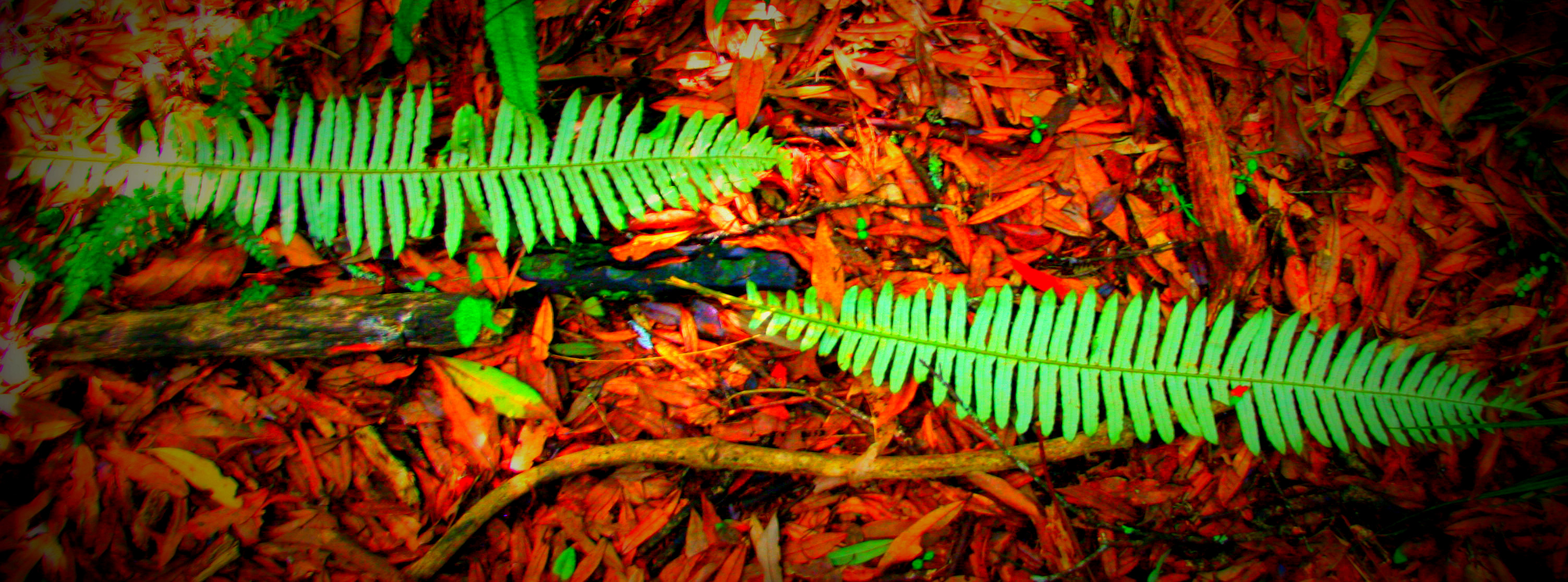fern leaves on the forest floor