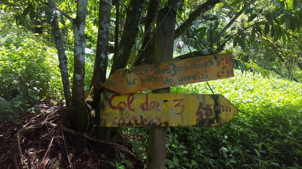 Old signposts with indistinct writing attached to a tree
