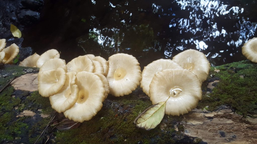 white fungi growing on a fallen tree