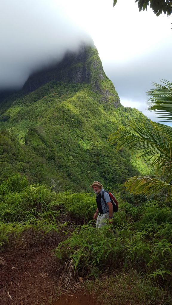 Man climbs the last few metres to the top of a hill. He is just emerging from the vegetation. Hill shrouded in cloud behind him