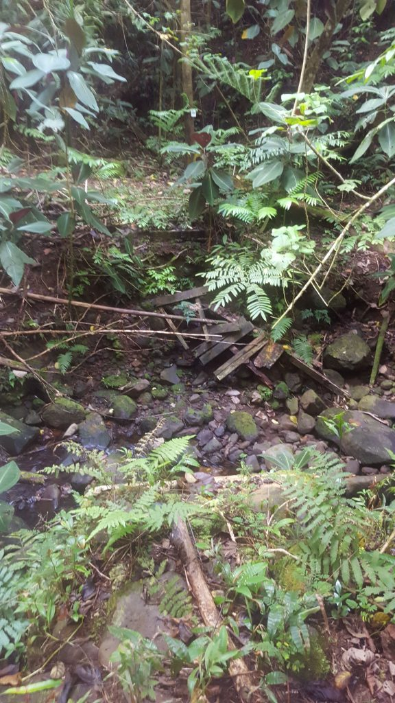 stream bed, foliage and broken wooden structure in the streambed that used to be a bridge